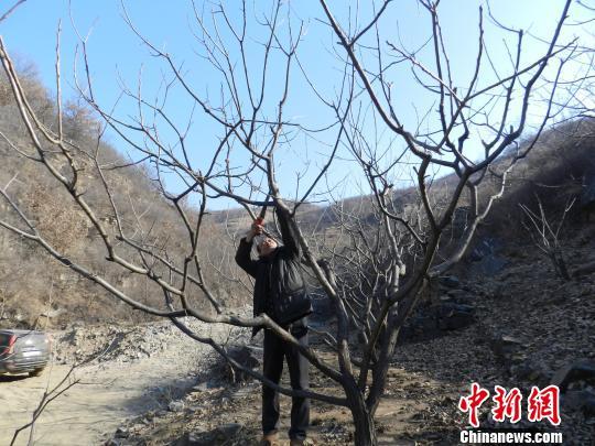 昔日矿老板承包200亩荒山造林带动村民致富(图)