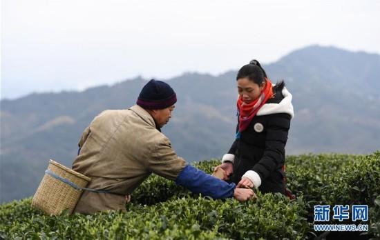 """""""茶叶+旅游""""助中国侗族民众脱贫增收"""