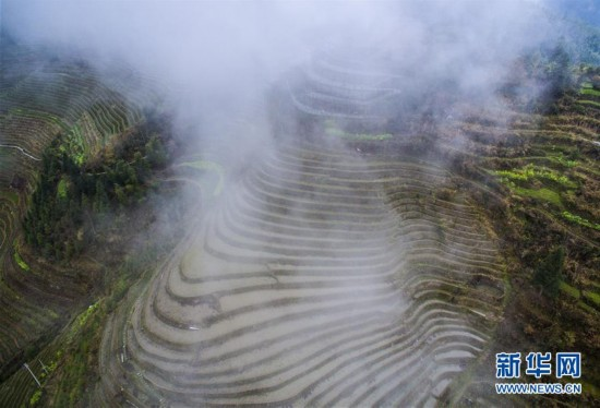 组图:春雾罩梯田