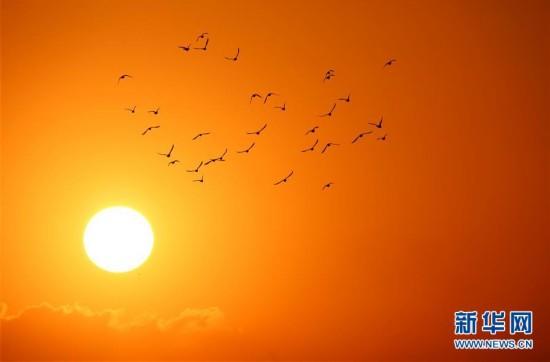 落日余晖中的飞鸟