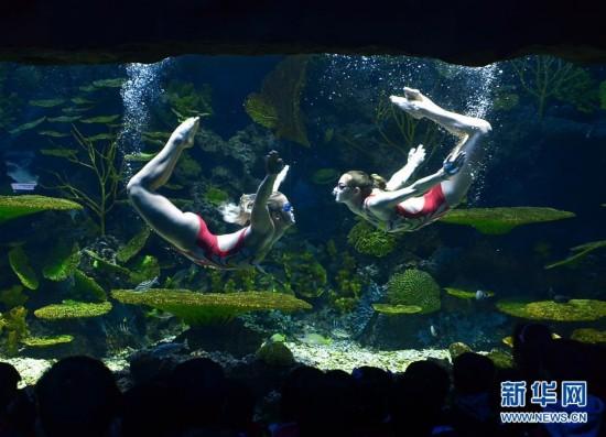 """海洋馆里的异国""""美人鱼"""""""