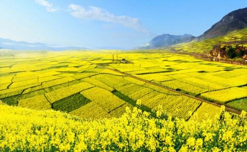 图为汉中勉县油菜花海。资料图