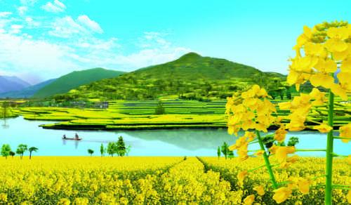 图为汉中油菜花美景。资料图