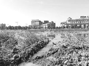 南京雨花台区4条黑臭河开工整治 将变身景观河