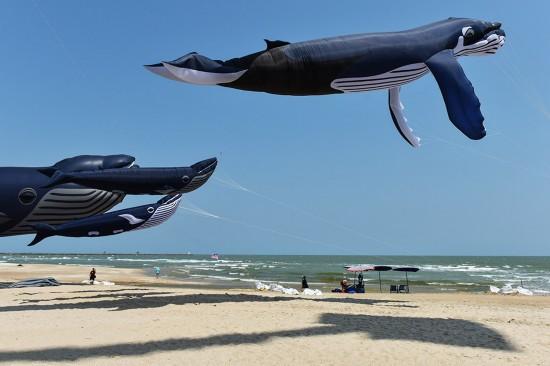 3月10日,在泰国碧武里府七岩海滩,鲸鱼造型的大型风筝在泰国国际风筝节上亮相。