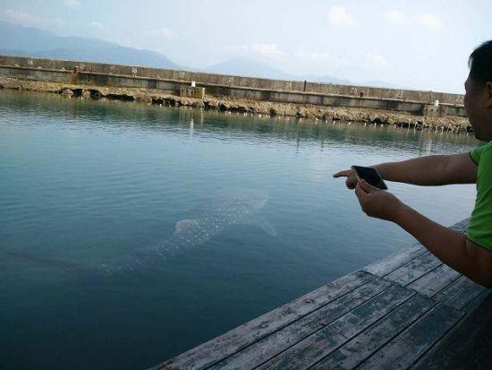 受伤鲸鲨获陵水多部门救助 康复将放归大海