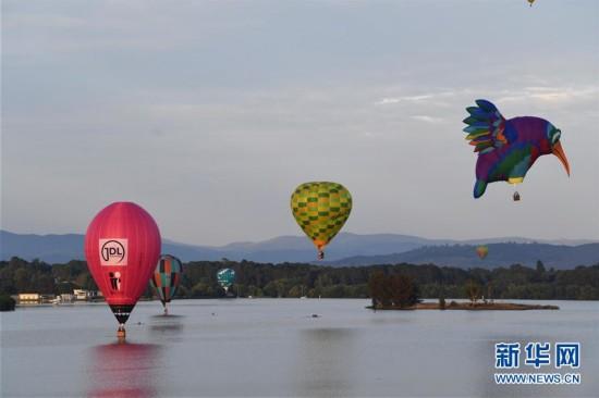 堪培拉举行热气球节