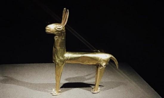 印加金羊驼。