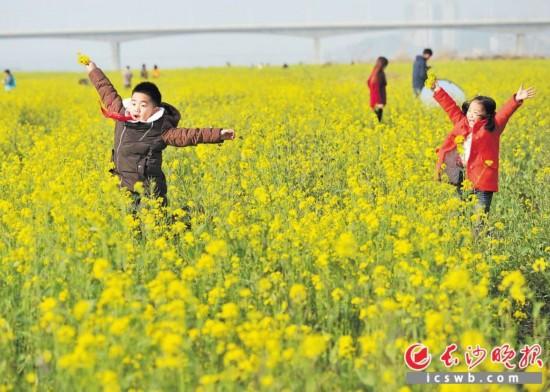 湘府路大桥与黑石铺大桥中间的湘江东河滩盛放的大片油菜花每年都吸引了众多游客前来赏花踏青。长沙晚报记者 王志伟 摄