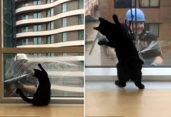 可爱!英国萌猫跟着洗窗工劳动节奏摇摆身体(图)