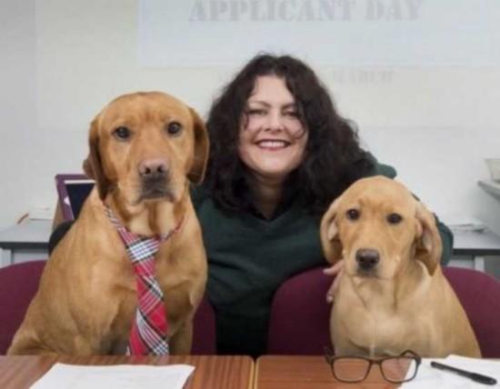 英大学兽医系招生 请3只拉布拉多犬做面试官