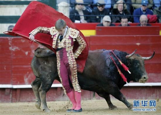 西班牙:火祭节斗牛(组图)