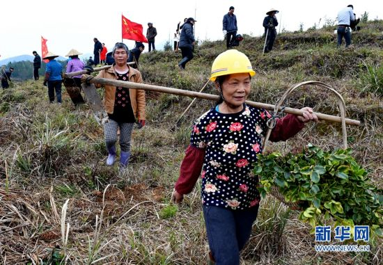 福建永泰:发展油茶种植 助力精准扶贫