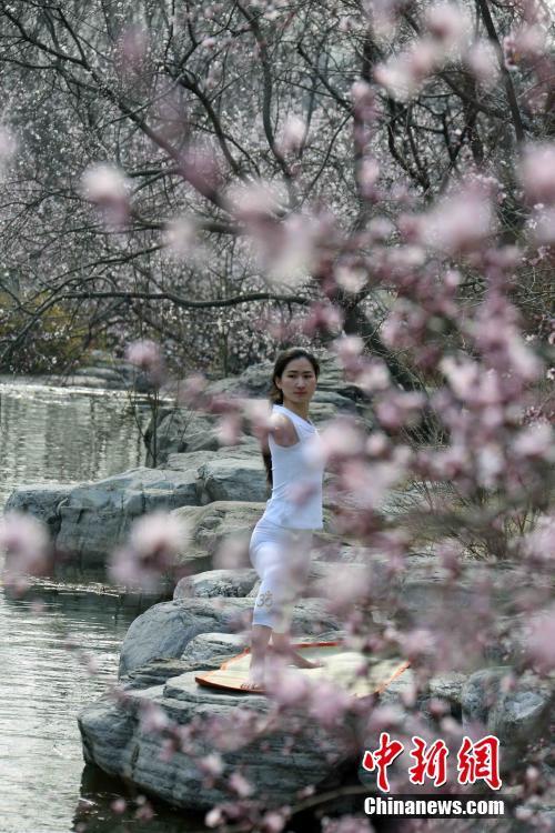 桃花春色暖先开 上海植物园第一波桃花盛开
