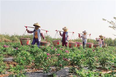 儋州:持续打响特色高效农业品牌