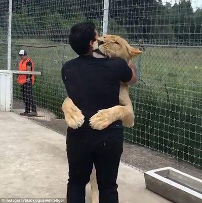 温馨!母狮三岁生日当天索吻拥抱驯兽员(图)