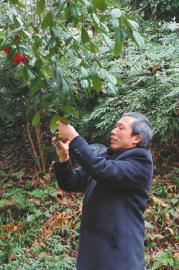 """从农民到植物专家峨眉山有个植物""""活地图"""""""
