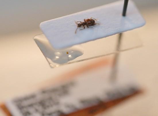 """这是3月16日拍摄的""""西郊公园毛角蚁甲""""。"""
