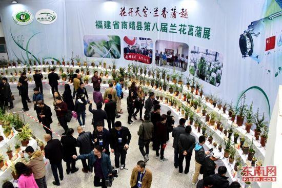 漳州南靖第八届兰花菖蒲展16日起举行 为期4天