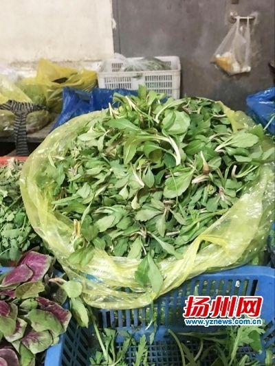 扬州市民最爱的野菜是马兰头
