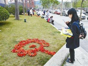 深圳木棉闹春