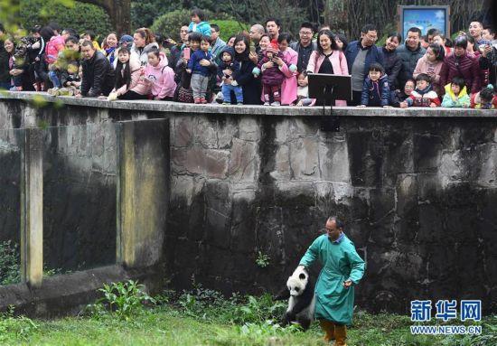 """3月18日,在重庆动物园,饲养员带着""""渝宝""""与游客见面。"""