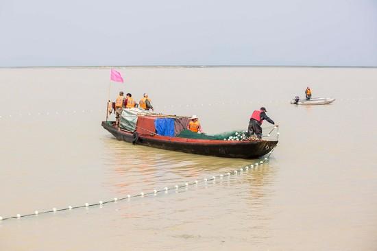 3月16日,工作人员在鄱阳湖都昌水域围捕江豚。