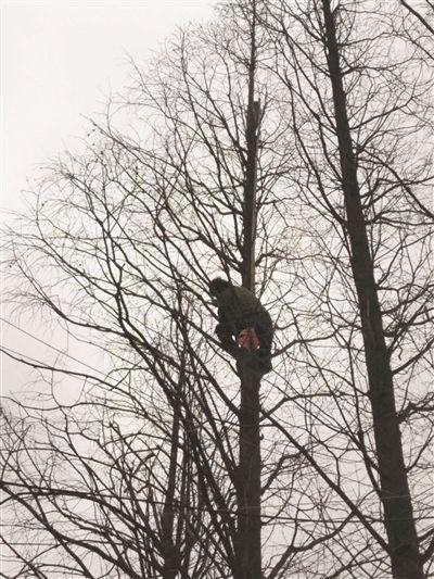 """小猫被狗""""撵""""上树5天下不来 老太上树救猫自己也下不来了"""