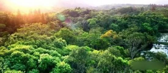 万宁今年计划新增造林绿化面积6000亩