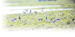 海口市开展城市修补、生态修复,湿地资源不仅得到保护,而且面积逐渐扩大、生物多样性更加丰富,一批湿地公园、保护小区正以美丽轻盈的脚步向我们走来。