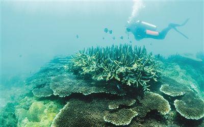 陵水分界洲岛珊瑚礁:从伤痕累累到繁荣绚丽