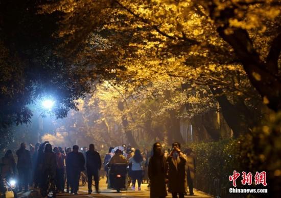 武汉大学樱花吸引游人夜赏(组图)