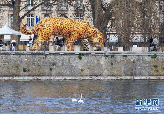 """世界水日:""""饮水的美洲豹""""现身日内瓦"""