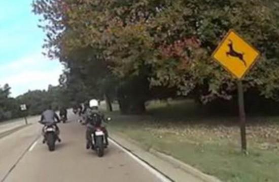 美国一摩托车手遇鹿横穿马路不慎翻车