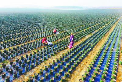 南京大泉湖畔将现700亩玫瑰园 总投资约7亿
