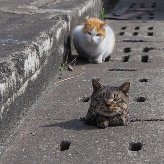 当流浪猫找到了下水道 简直像找到了天堂(组图)