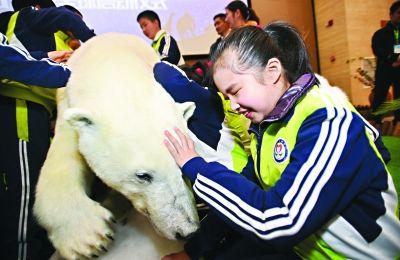 首具北极熊动物标本昨日抵汉