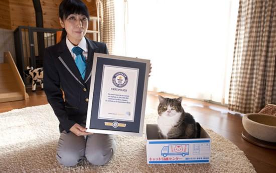 日本小猫夺Youtube人气冠军 钻盒子视频俘获全