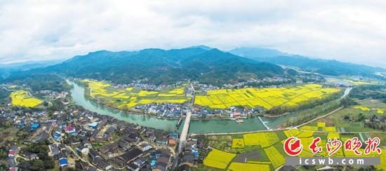 浏阳河上游,金色花海将达浒小镇古香古色的民居映衬得格外秀美。