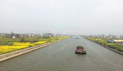南通海安10万亩油菜长势喜人 大地一片金黄