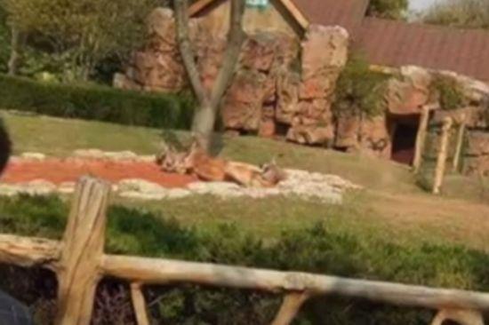 扬州男子想拍动态照 在动物园拿石砸袋鼠