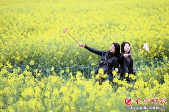 浏阳古港镇松山屋场,游客在油菜花田中自拍。
