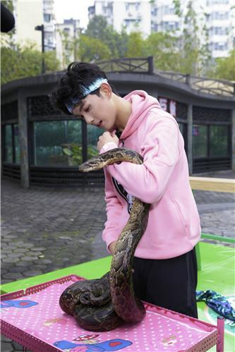吴磊与蟒蛇大胆互动 工作人员吓出冷汗