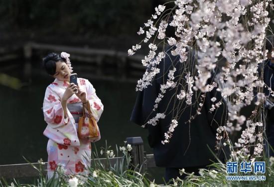 [1](外代二线)东京樱花盛开