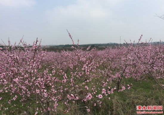 南京溧水东屏镇长乐社区打造乡村旅游胜地