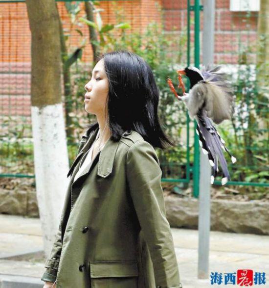 这群漂亮大鸟秒变愤怒小鸟 在厦门前埔一带偷袭了十多人