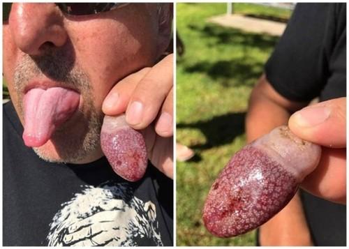 澳洲海滩发现神秘生物 超像舌头