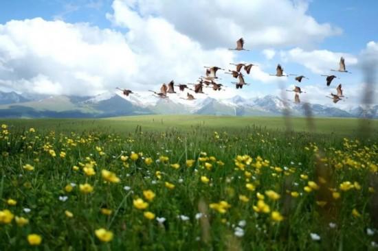 额敏:天边的草原 绿色的圣地