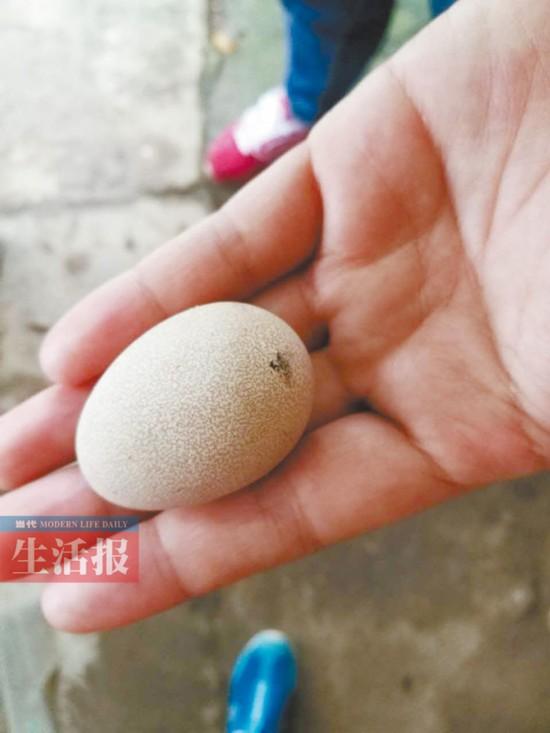 一批毒鸡蛋被人拿走下落不明 南宁警民全城寻蛋