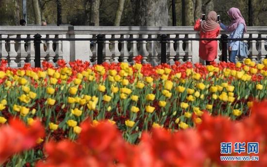 英国公园春花烂漫